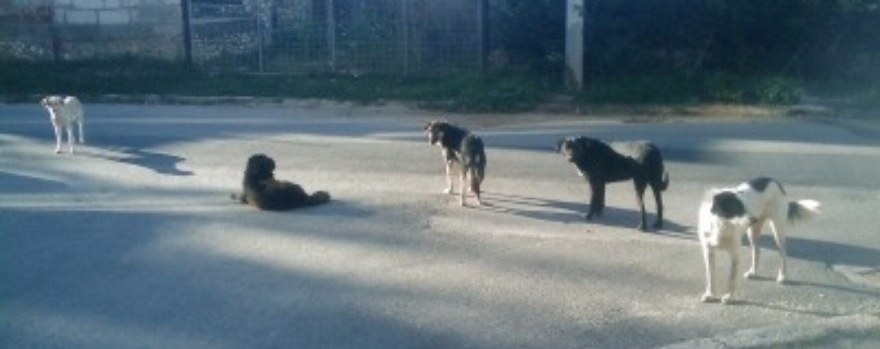 Peste 1.100 de persoane au ajuns la spital, în Târgovişte, muşcate de câini