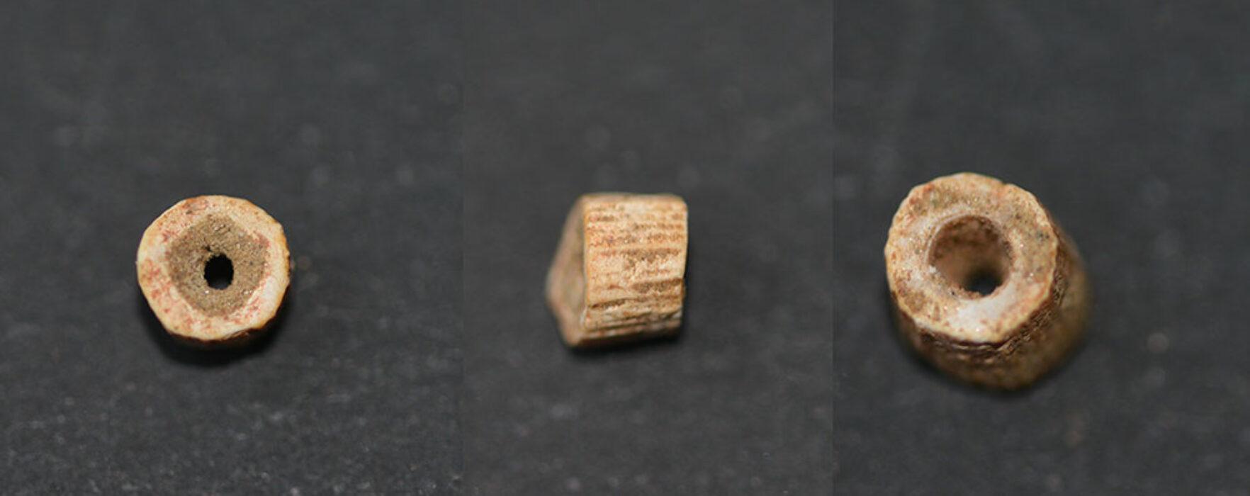 Noi descoperiri de podoabe paleolitice ale arheologilor dâmboviţeni pe șantierul de la Poiana Cireșului