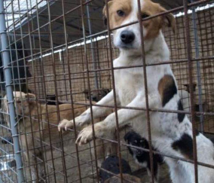 Adopţiile de câini, la Târgovişte, stopate pentru circa două săptămâni