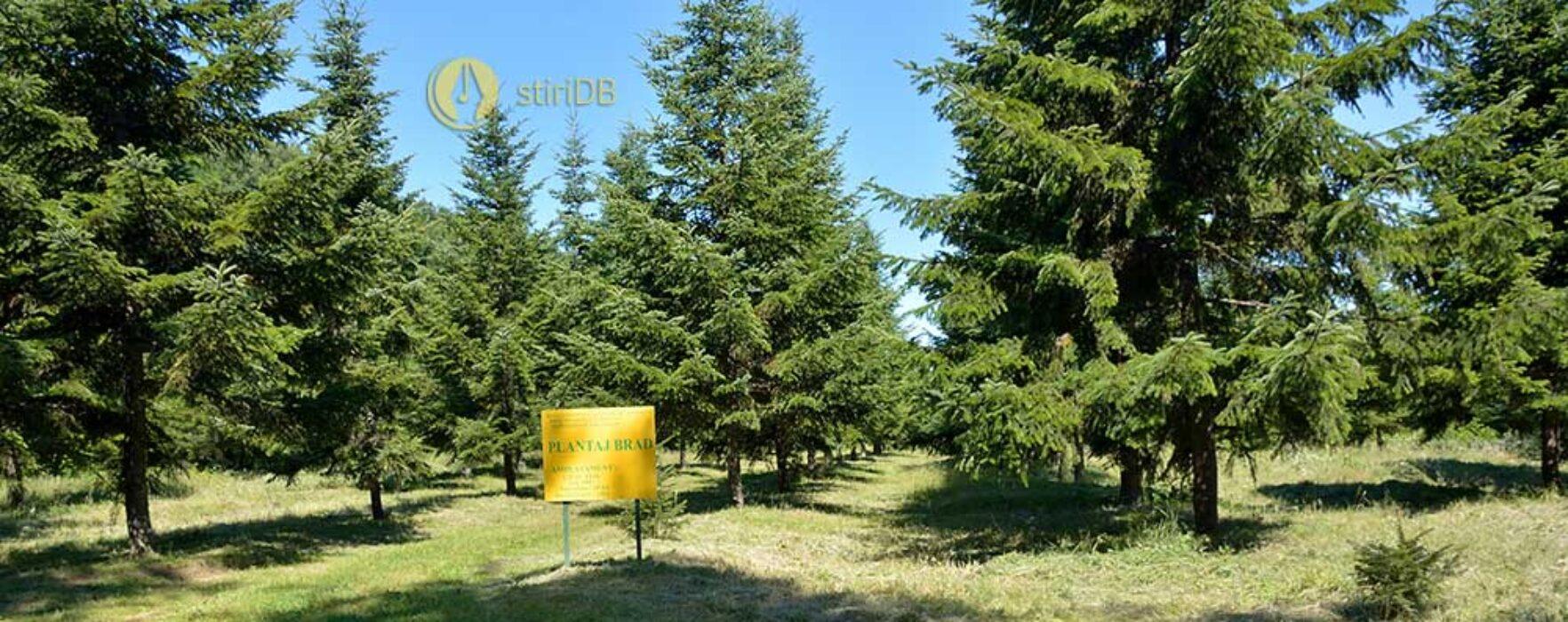 Direcţia Silvică Dâmboviţa: Îngheţul târziu din acest an a afectat fructificaţia la speciile forestiere