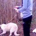 IPJ Dâmboviţa efectuează cercetări, după ce au fost făcute publice imagini cu un câine incendiat de un adolescent