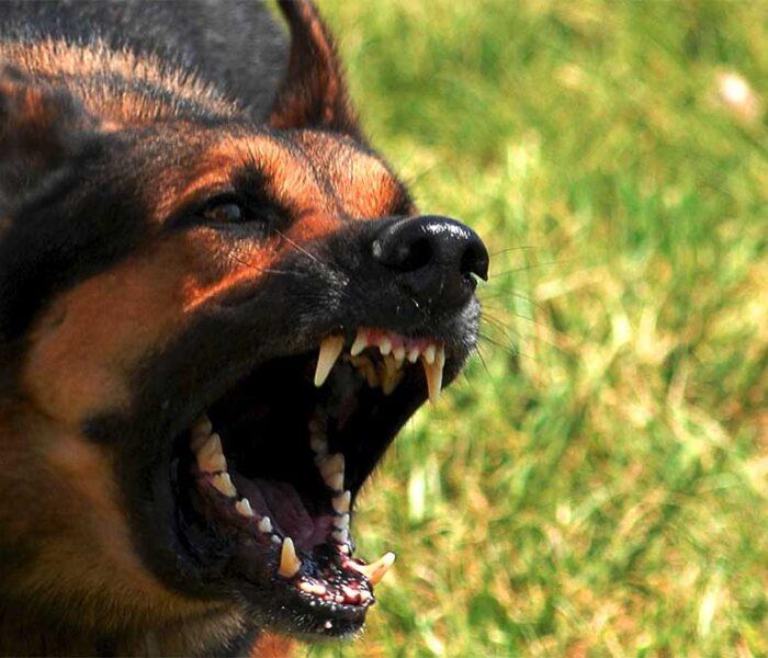 Dâmboviţa: Bătrână de la un centru social din Pucioasa, găsită moartă într-o grădină, muşcată de câini