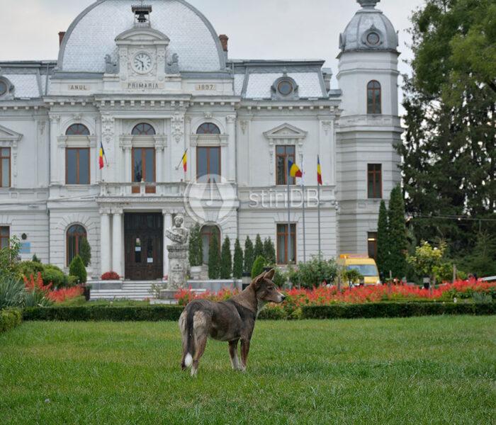 Târgovişte: Cei care au câine la bloc au nevoie de acordul vecinilor