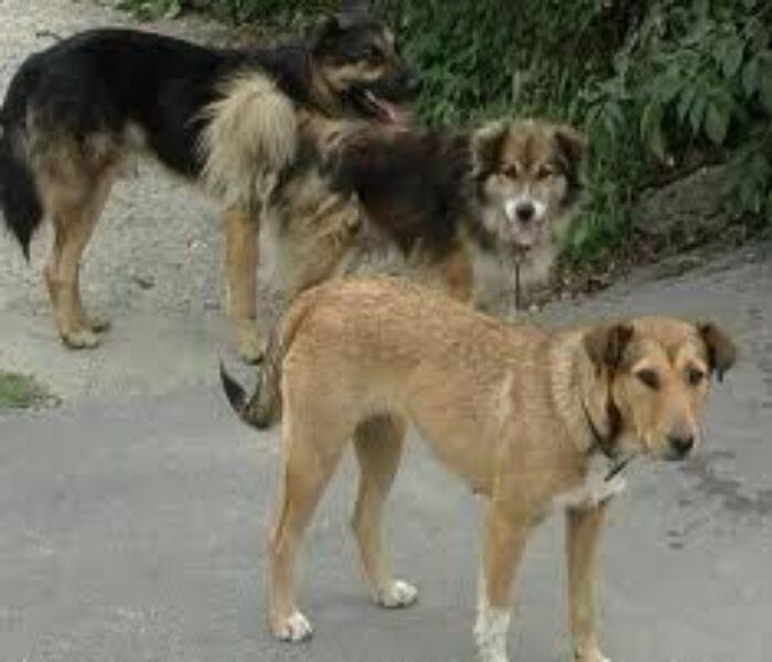 Femeie de 83 de ani, din Petreşti, muşcată de câini