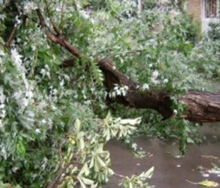 Localităţi nealimentate parţial cu energie electrică şi copaci căzuţi din cauza ploilor şi vântului