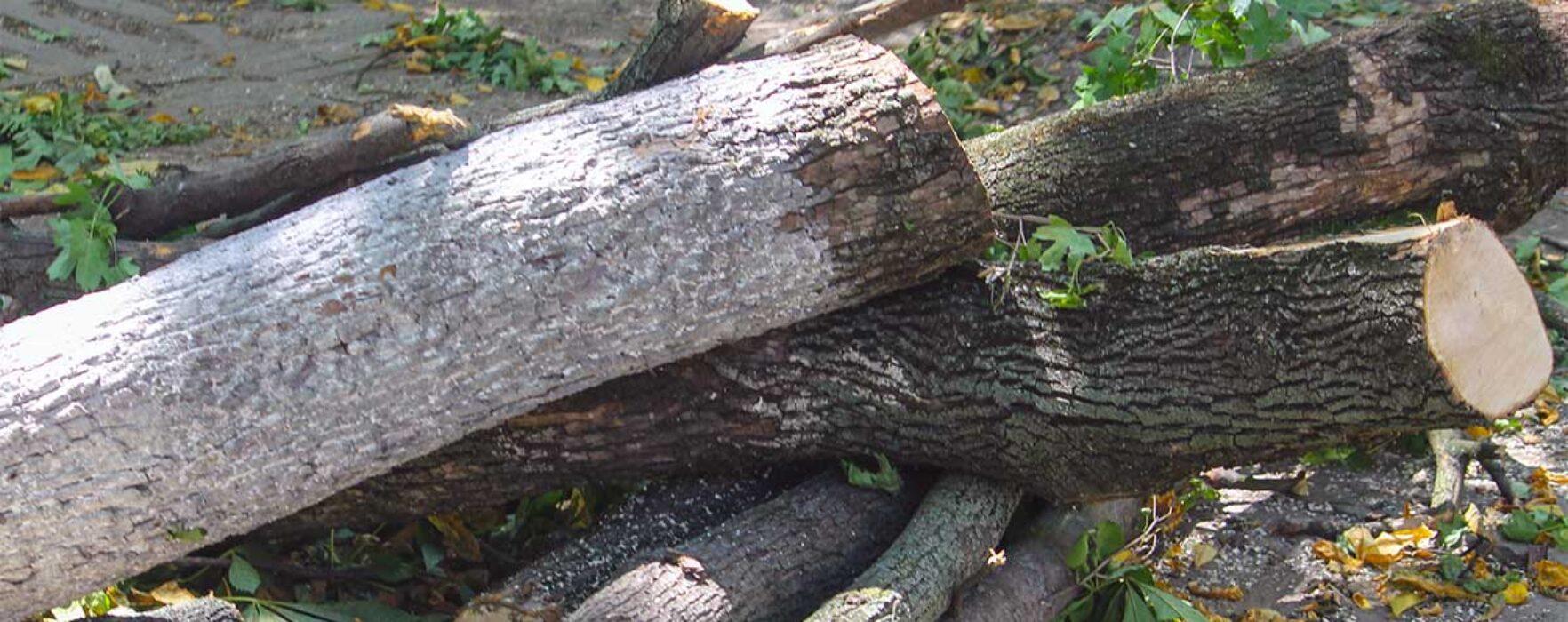 Runcu: A murit în timp ce tăia un copac