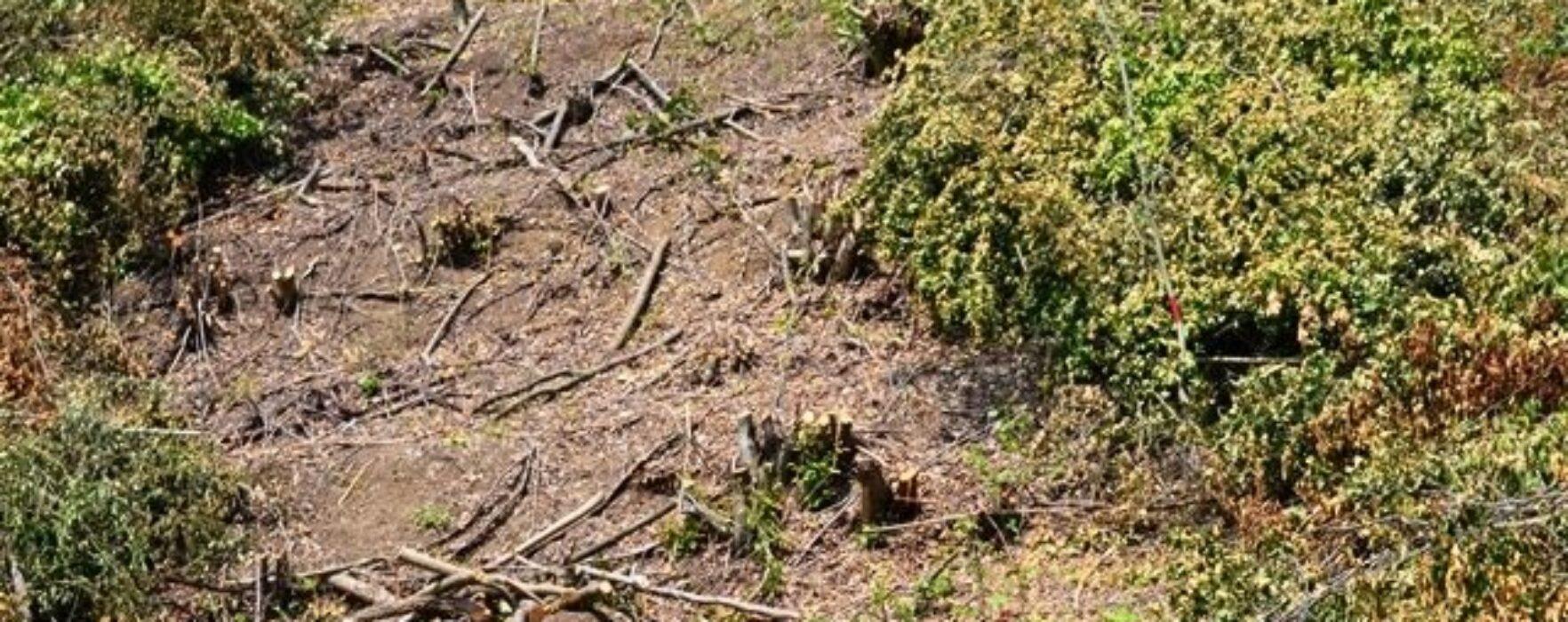 Prinşi de jandarmi că au defrişat 5.000 mp de pădure în Valea Mare