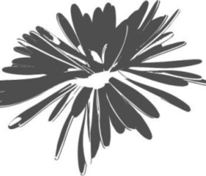 Programul Festivalului 'Crizantema de Aur'