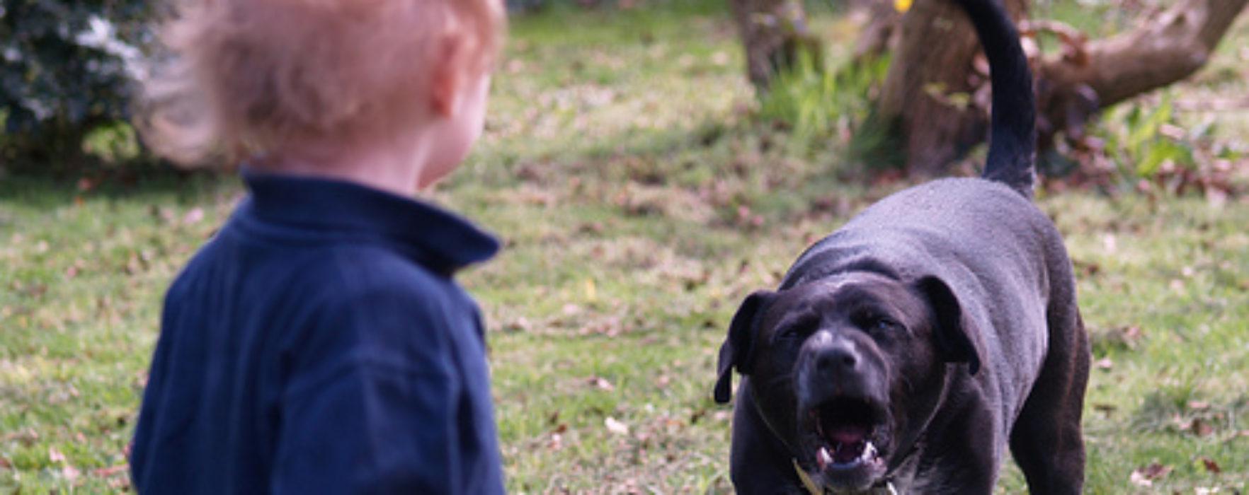 Copil de trei ani, muşcat de faţă de un câine comunitar