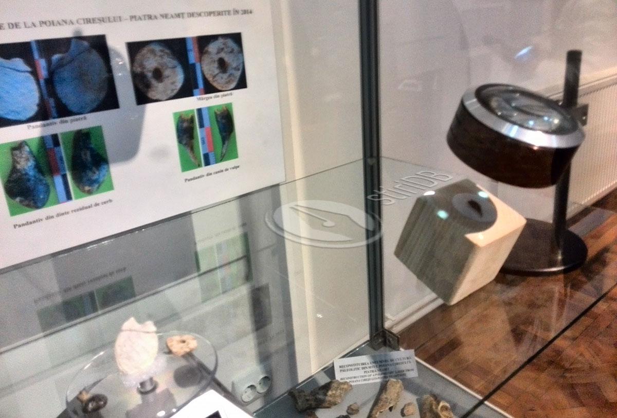 evolutie-microscop