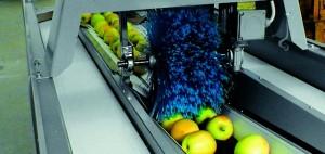 fabrica legume fructe