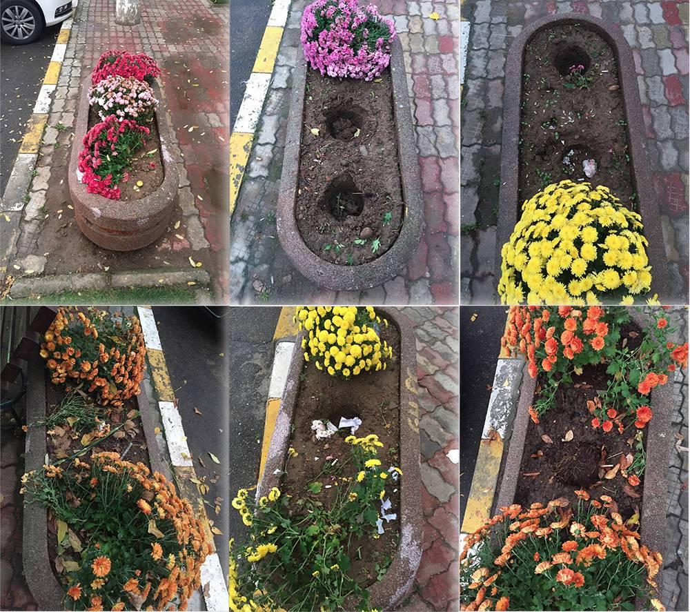 flori-devastate