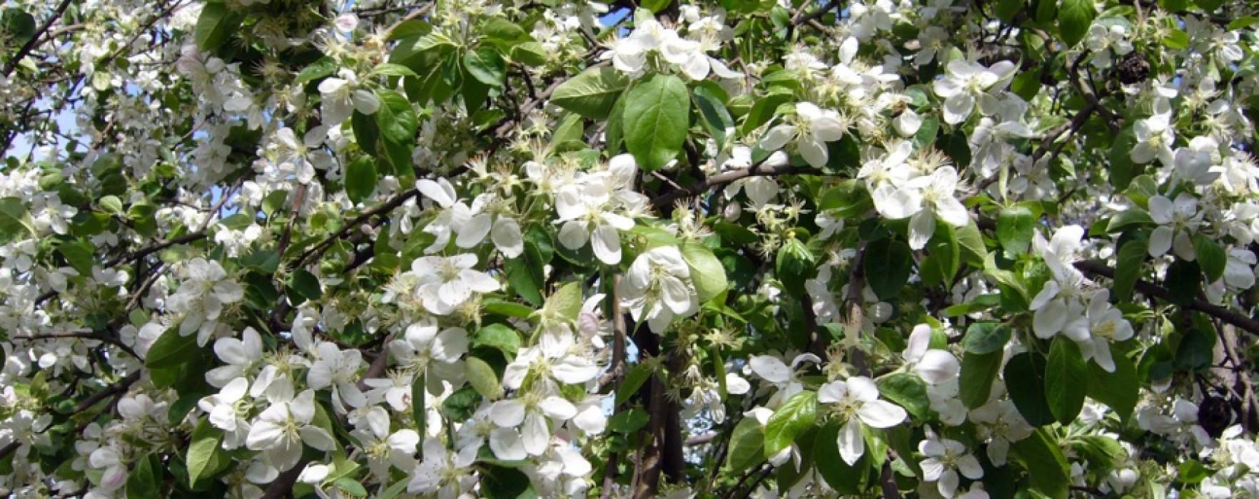 Obiceiuri de Florii