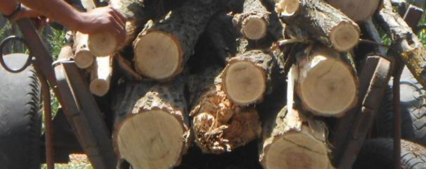 Dâmboviţa: Percheziţii la hoţi de lemne