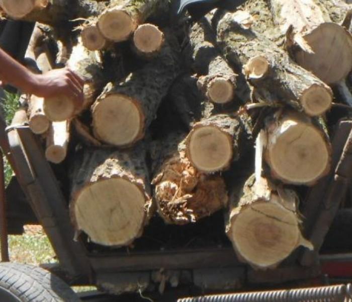 Dâmboviţa: 10 percheziţii la hoţi de lemne