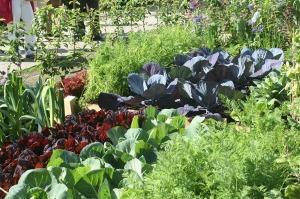gradina-legume