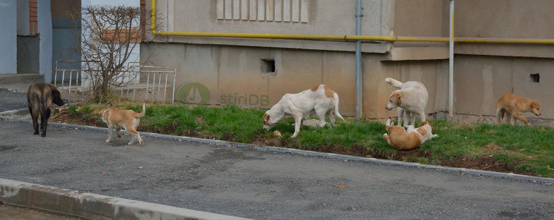 Târgovişte: 100.000 de lei pentru sterilizarea câinilor; vezi cine va rezolva problema maidanezilor
