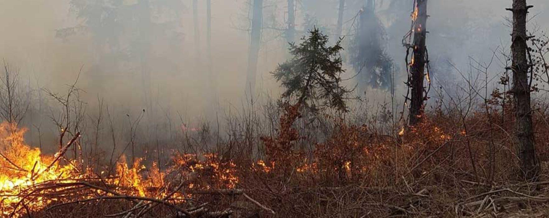 Dâmboviţa: Incendiu într-o pădure de pin pe o suprafaţă de cinci hectare
