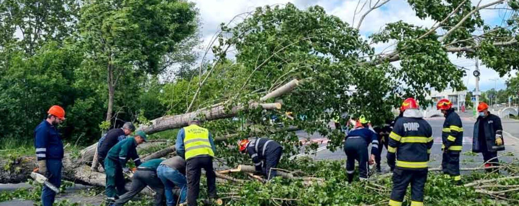 Dâmboviţa: Copaci doborâţi de vânt au afectat reţeuaa electrică şi traficul rutier