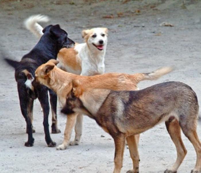 74% dintre târgovişteni vor eutanasierea câinilor, conform unei consultări publice