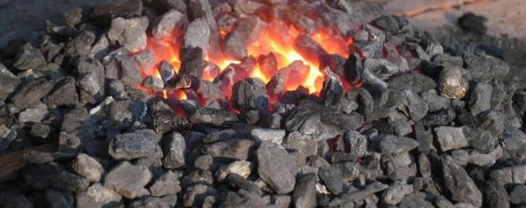 Direcţia Silvică Dâmboviţa produce mangal şi caută cumpărători pentru acest produs