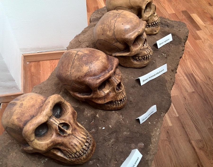 muzeu paleolitic 4
