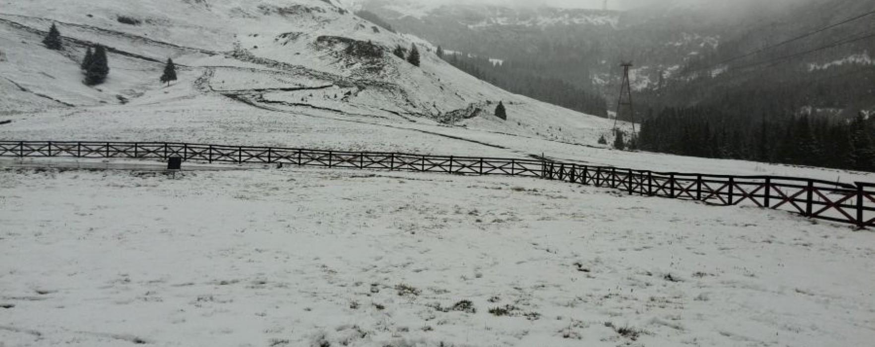Cod Galben de ninsori în zona montană a judeţului Dâmboviţa