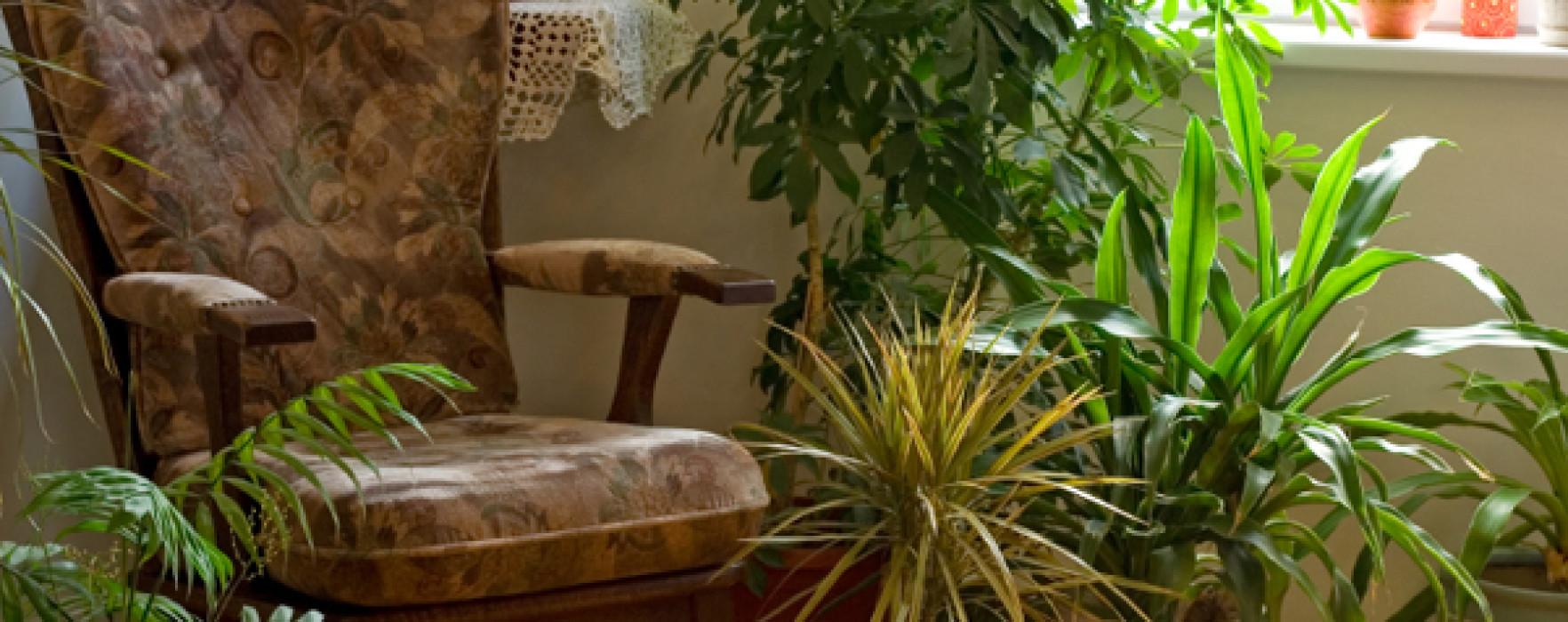 8 plante care purifică aerul din casa