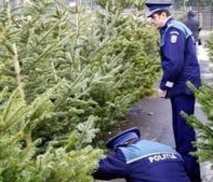Sute de pomi de Crăciun, confiscaţi de poliţişti în Dâmboviţa