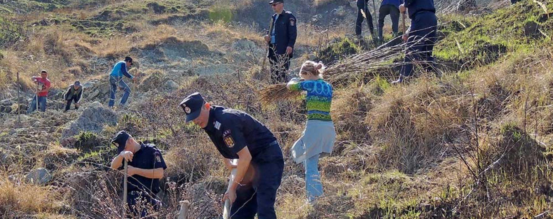 Dâmboviţa: Cadrele ISU au plantat sute de puieţi de salcâm într-o zonă afectată de alunecări de teren