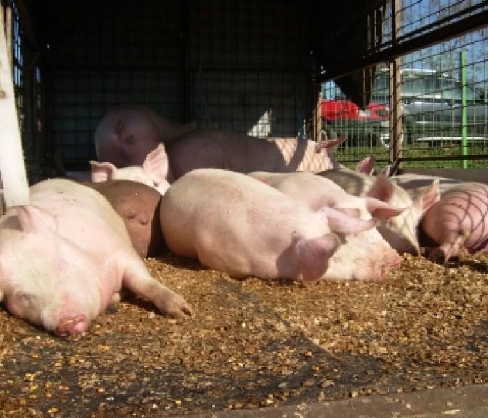 Primul târg privat de animale vii din Dâmboviţa, deschis la Lunguleţu