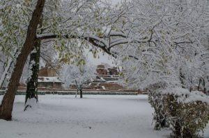 prima ninsoare noiembrie 2013-06