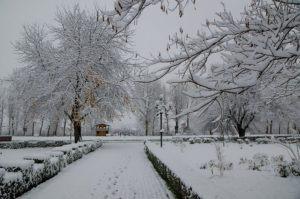 prima ninsoare noiembrie 2013-08