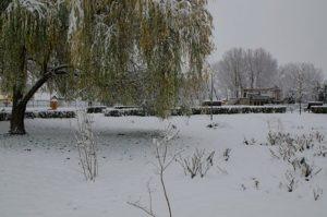 prima ninsoare noiembrie 2013-09