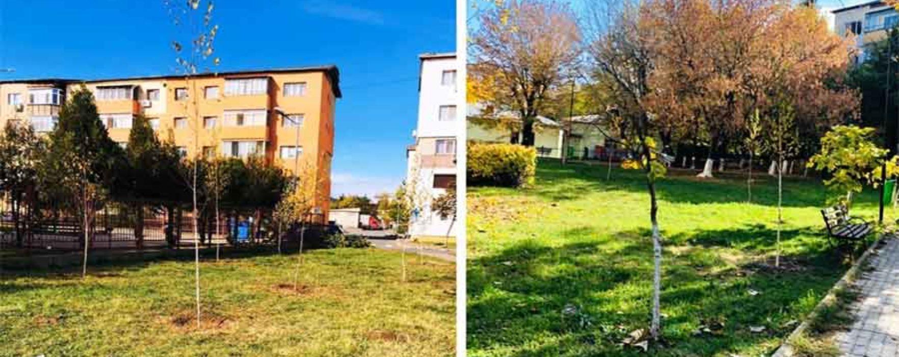 Târgovişte: Aproximativ 1.000 de arbori şi arbuşti vor fi plantaţi în noiembrie în municipiu