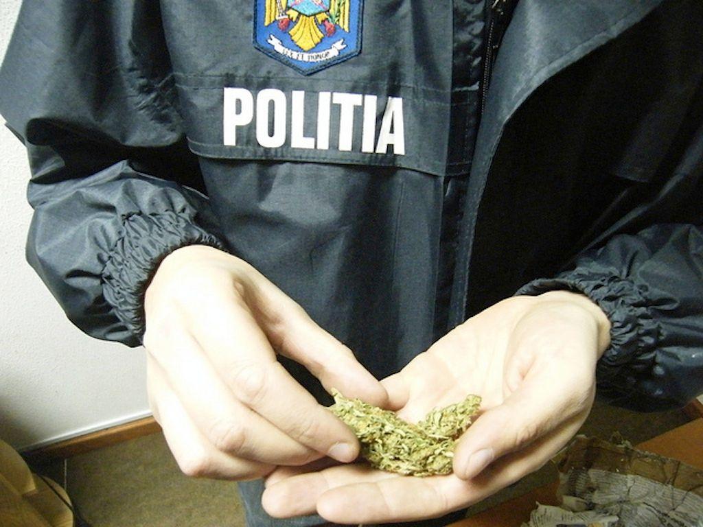 trafic canabis droguri