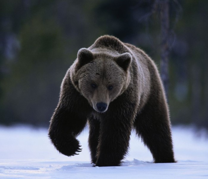Bărbat atacat de urs, în zona Padina