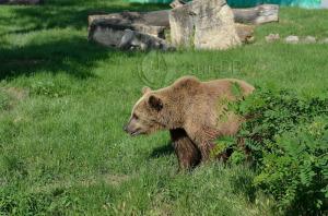 urs-meri